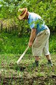 Farmer Digging Cultivated Onion