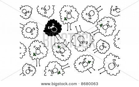 White and black sheep background