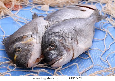 Three Bream In Fishing Net On Blue Wooden Background