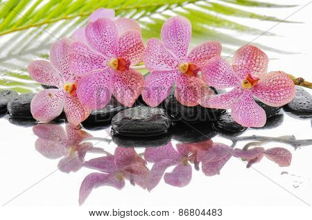 Branch orchid and set of stones with palm on wet
