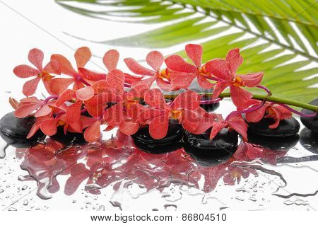 Branch orange orchid and set of stones with palm on wet