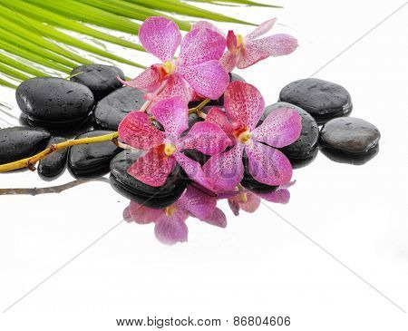 Lying down branch pink orchid with stones and palm