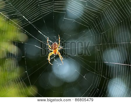 Closeup View Of A Spider