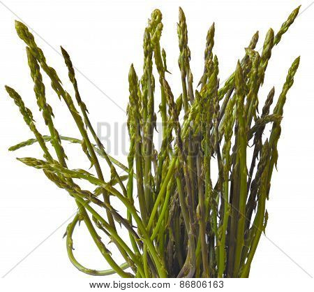 A bunch of freshly picked wild asparagus