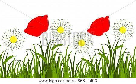 Daisy And Corn Poppy Border