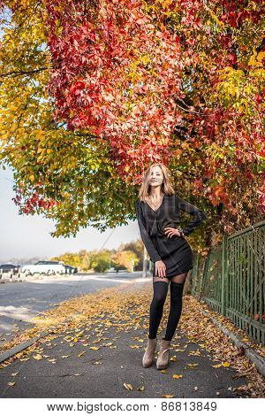 Young Pretty Elegant Lady Posing Near Colourfull Tree At Autumn Outfit