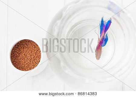 Beta Fish Food And The Fish In A Clear Bowl