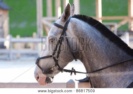 Grey  Horse Outdoor