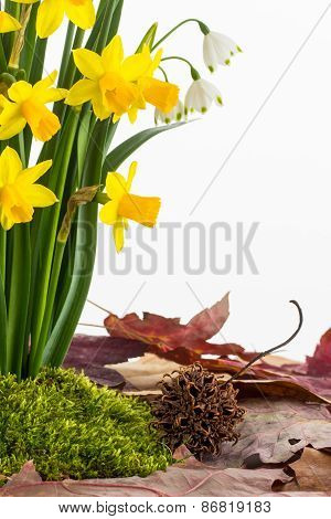 Spring Flowers, Moss And Dried Leaves