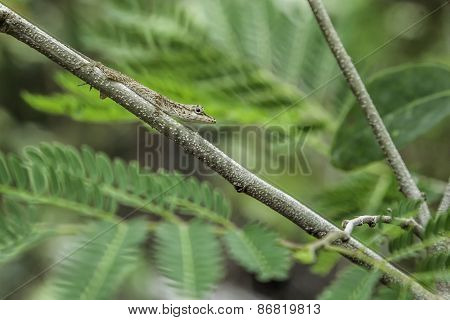 Closeup Of Green Lizard Sitting On Branch.