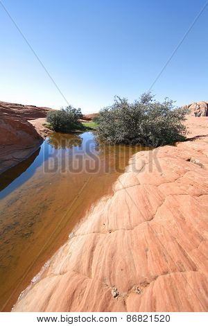 Petrified Sand Dune with pooled water