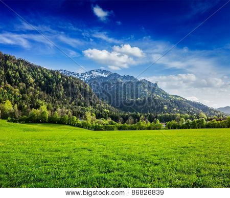 Alpine meadow in Bavarian Alps. Bavaria, Germany