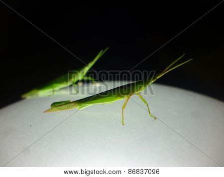 grasshoper sitting on a night lamp