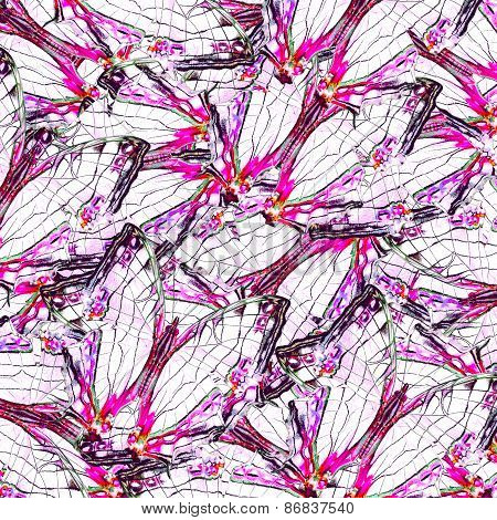 White And Pink Background From Common Map Butterflies