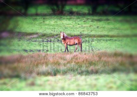Horse stood alone