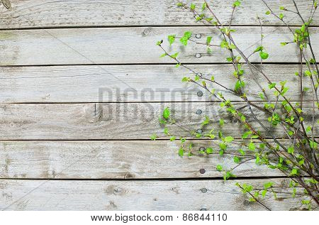 Wooden Texture Of Wood Composition