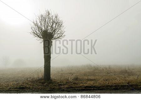 Small Tree In Fog