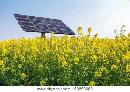 Solar Power In Spring