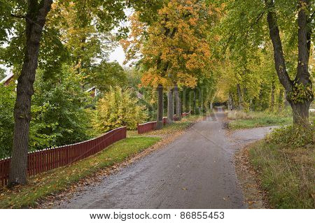 Gravel road surrounded of trees and fences.