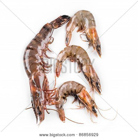 Raw tiger shrimps on white.