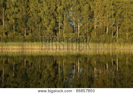 Forest reflection in water