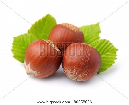Filbert Nuts With Leaf