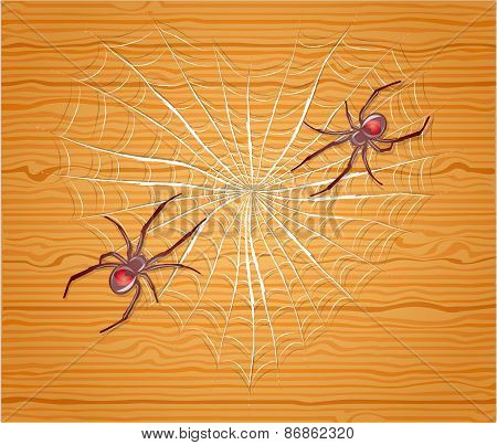 Spiders with heart.
