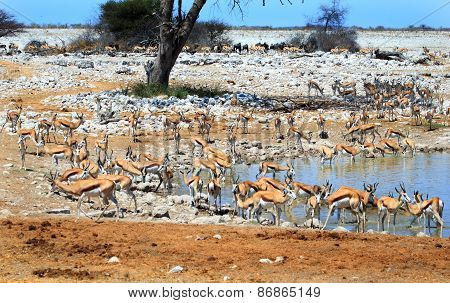 A vibrant waterhole in Etosha National Park