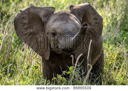 Very Cute Excited Baby Elephant