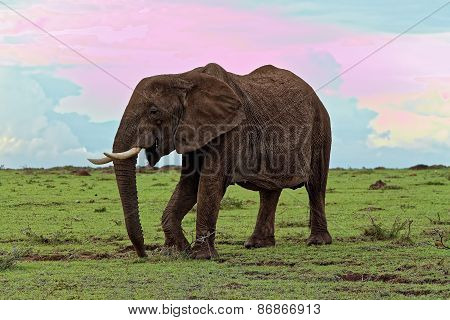 Elephant taking a walk in the jungle against a colourful sky