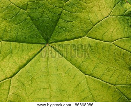 Green leave close-up