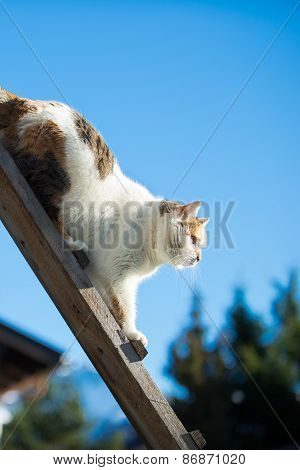 female cat walking down a woodenb ladder at blue sky