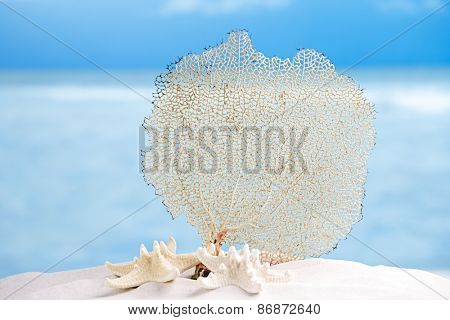 seafan and sea shell with ocean, beach, sky and seascape, shallow dof