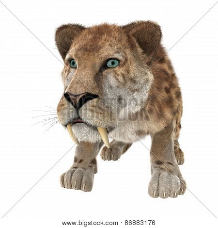 Big Cat Smilodon