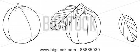Delightful Garden - Set Of Two Guavas With Leaves