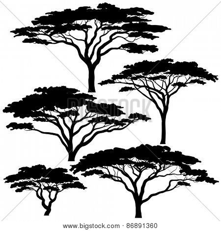 Set of illustrated silhouettes of acacia trees
