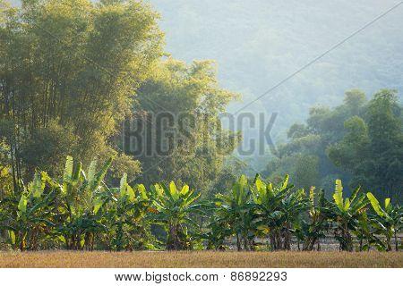 Banana and bamboo trees landscape in the Mai Chau village, Vietnam