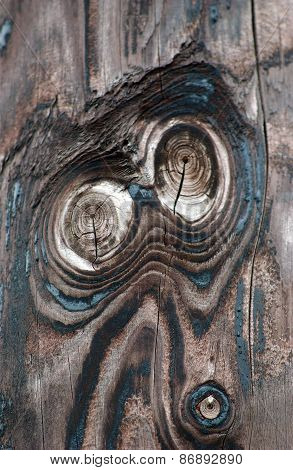 Owl Eyes On  A Wood