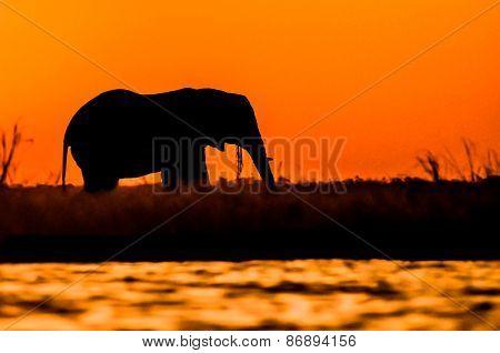 Elephant Bull Silhouette On Sidudu Island.