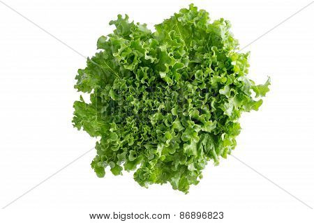 Head Of Crispy Leafy Californian Lettuce
