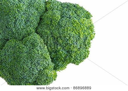 Isolated Head Of Farm Fresh Broccoli