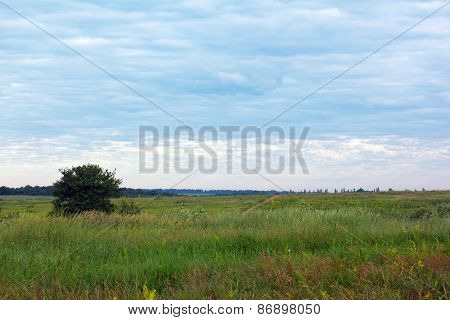 Landscape Of A Grassy Field, A Lone Tree And Overcast Sky