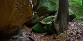 picture of coniferous forest  - Rocks in the forest - JPG