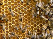pic of swarm  - bees swarming on a honeycomb - JPG