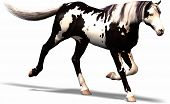 picture of gaul  - a wild horse with black and white conturs - JPG