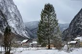 stock photo of conifers  - winter village mountain tree cold conifer snow - JPG