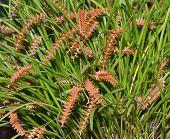 stock photo of epiphyte  - Wenzel
