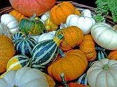 Background of pumpkins