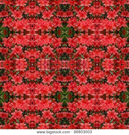 Azalea Flower Seamless Pattern Background