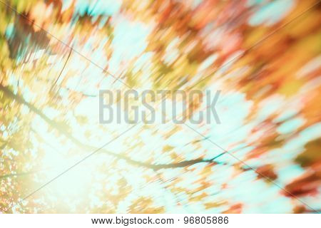 blur of yellow leaves